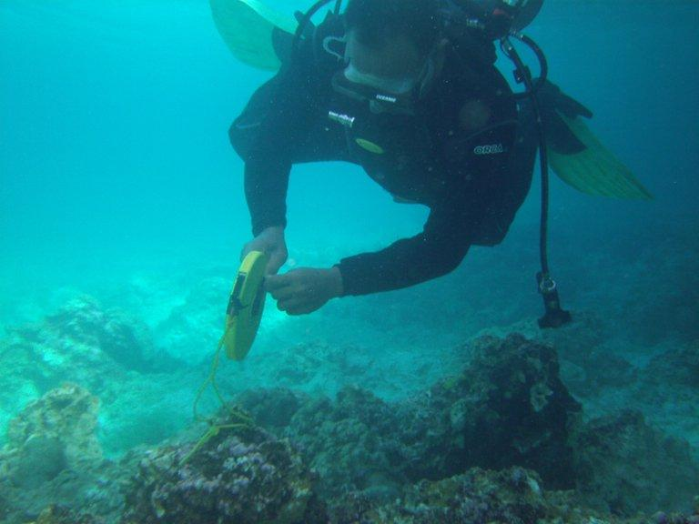 This handout photo, taken on January 22, 2013 and released by Philippine Coast Guard (PCG), shows a gov't diver investigating the damage to corals after a US navy minesweeper, the USS Guardian, ran aground on January 17 at the Tubbataha reef, off the western island of Palawan