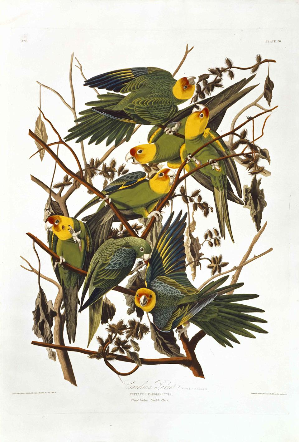 Audubon's The Birds of America – the world's most expensive book and one of the best-known natural history books ever produced. It was first published in double elephant folio size between 1827 and 1838 and is famous for its stunning life-size illustrations of birds. (Natural History Museum)