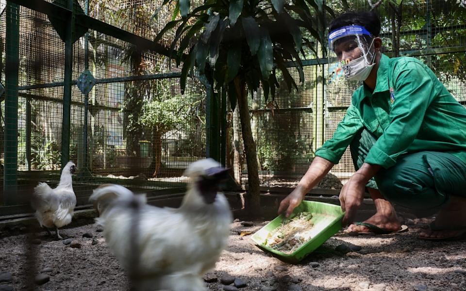 The first day of zoo reopens with the new normal health protocols and maintaining social distancing amid the spread of the coronavirus (COVID-19) outbreak at Ragunan Zoo in Jakarta, Indonesia on June 20, 2020. - Anadolu Agency