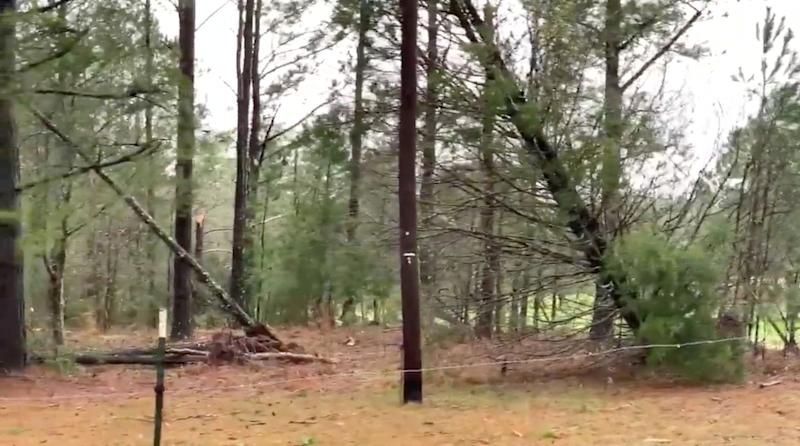 Damaged and fallen trees seen following a tornado in Beauregard, Alabama, U.S. in this March 3, 2019 still image obtained from social media video. (Photo: Scott Fillmer /via Reuters)