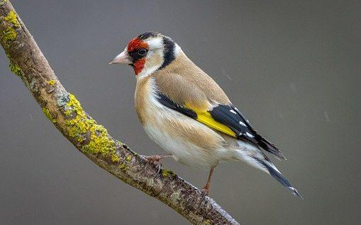 A raid on a home near Barcelona found hundreds of finches caged in poor conditions - David Briard