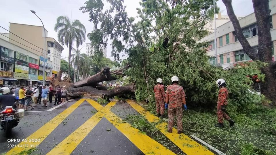 The giant Angsana tree at Perak Road fell over and crushed a car driving by at about 9.30am April 27, 2021.