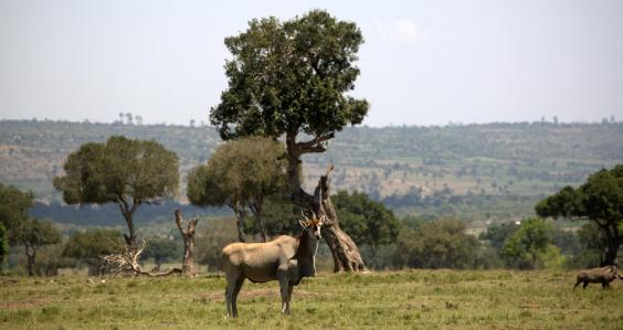 A walking safari also means protecting the land (Asilia)