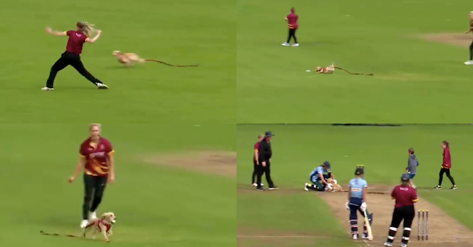 Watch: Dog Invades Cricket Pitch In A Hilarious Incident During Women's All-Ireland T20 Semi-Final