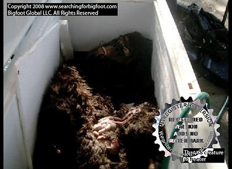 "This photograph obtained Aug. 15, 2008, from <a href=""www.searchingforbigfoot.com"" target=""_hplink"">Searching For Bigfoot</a> shows what is purported to be the body of the legendary ape-like creature that has been the subject of decades of hoaxes and dubious sightings. Matthew Whitton and Rick Dyer claimed before a crowd of skeptical reporters in Palto Alto, Calif., that they were hiking in a northern part of Georgia when they stumbled upon the body near water. The corpse was said to be 7 feet, 7 inches tall, weighing more than 500 pounds. Many scientists believe Bigfoot is folklore instead of fact."