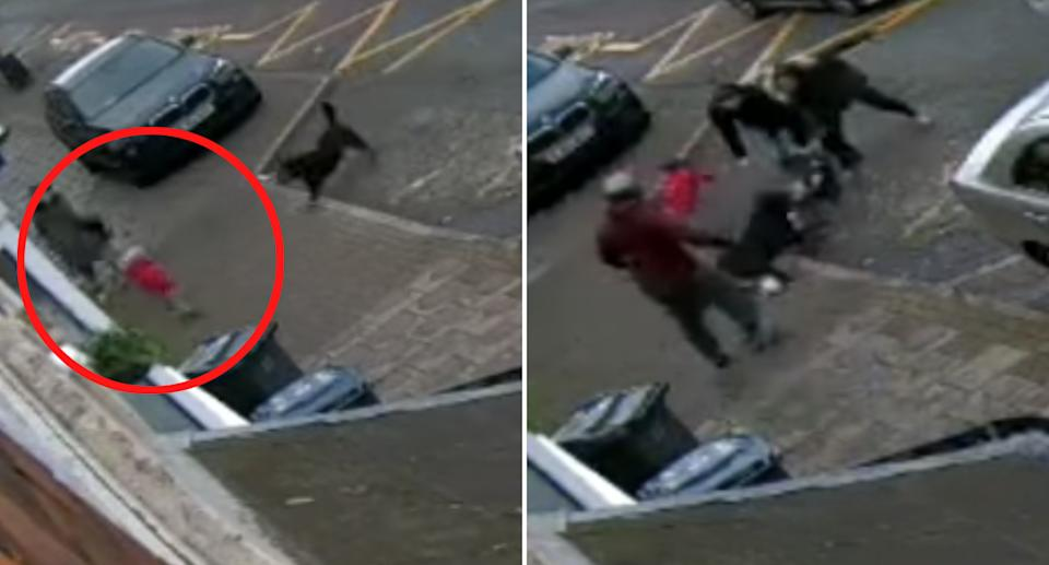 A dog attacks two toddlers on a Birmingham street.