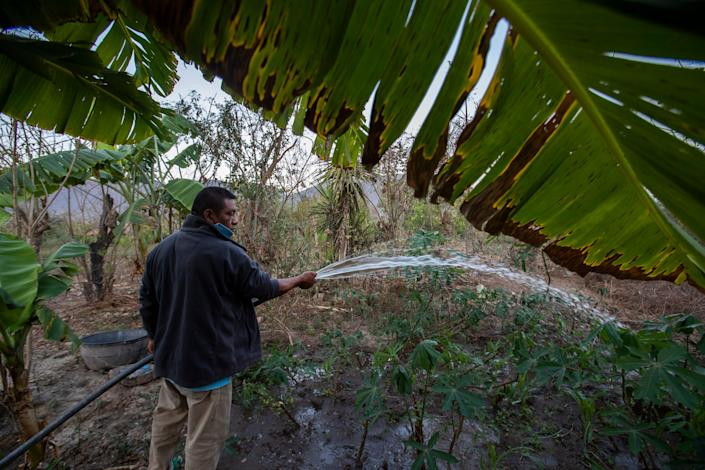 Francisco Sical uses well water to irrigate his garden at his home in Baja Verapaz, Guatemala, in early March 2020.