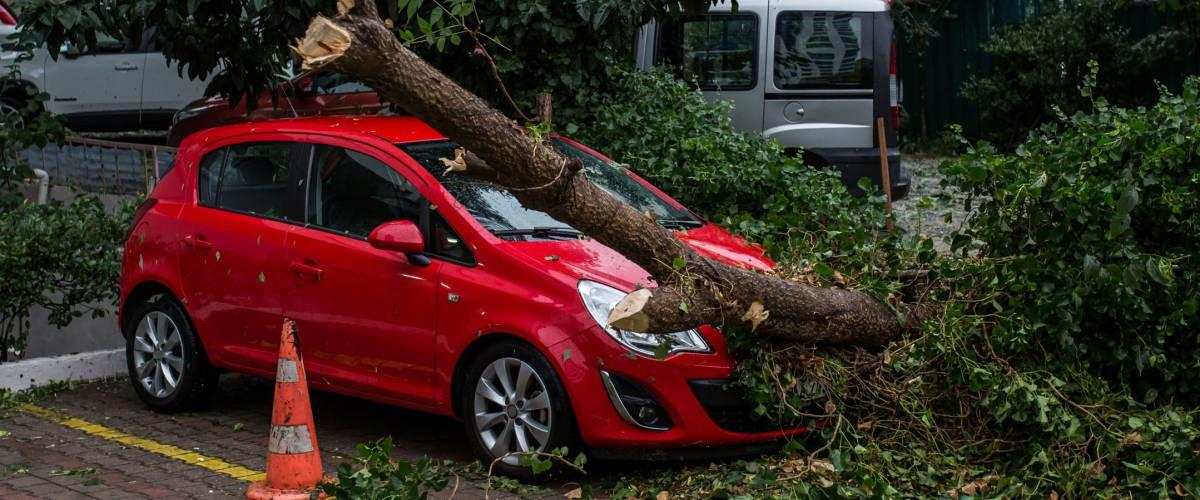 <cite>Car under fallen tree / Shutterstock</cite> <br>Comprehensive covers your car if it's damaged by something other than a crash.<br>