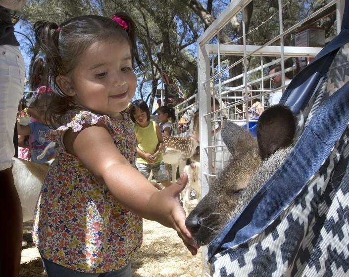 Cataleja Ramirez,15 months, pets Keele, a 4-year-old Bennett Wallaby during a visit to the California State Fair, Friday, July 22, 2016, in Sacramento, Calif. The fair is entering it's final weekend and will close, Sunday, July 24.(AP Photo/Rich Pedroncelli)