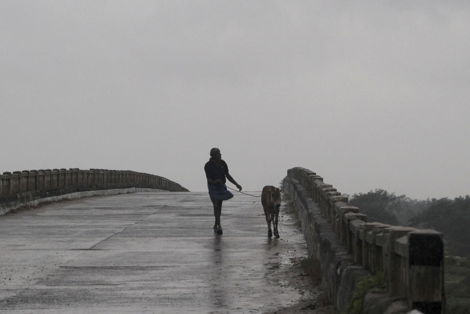 A man walks with a calf over a bridge in the rain ahead of Cyclone Amphan landfall, at Bhadrak district, in the eastern Indian state of Orissa, Wednesday, May 20, 2020. A strong cyclone blew heavy rains and strong winds into coastal India and Bangladesh on Wednesday after more than 2.6 million people were moved to shelters in a frantic evacuation made more challenging by coronavirus. (AP Photo)