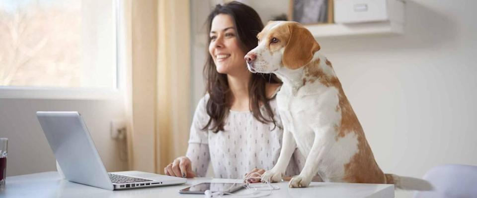 Businesswoman looking through window with her dog in home office . Businesswoman in thirties concept