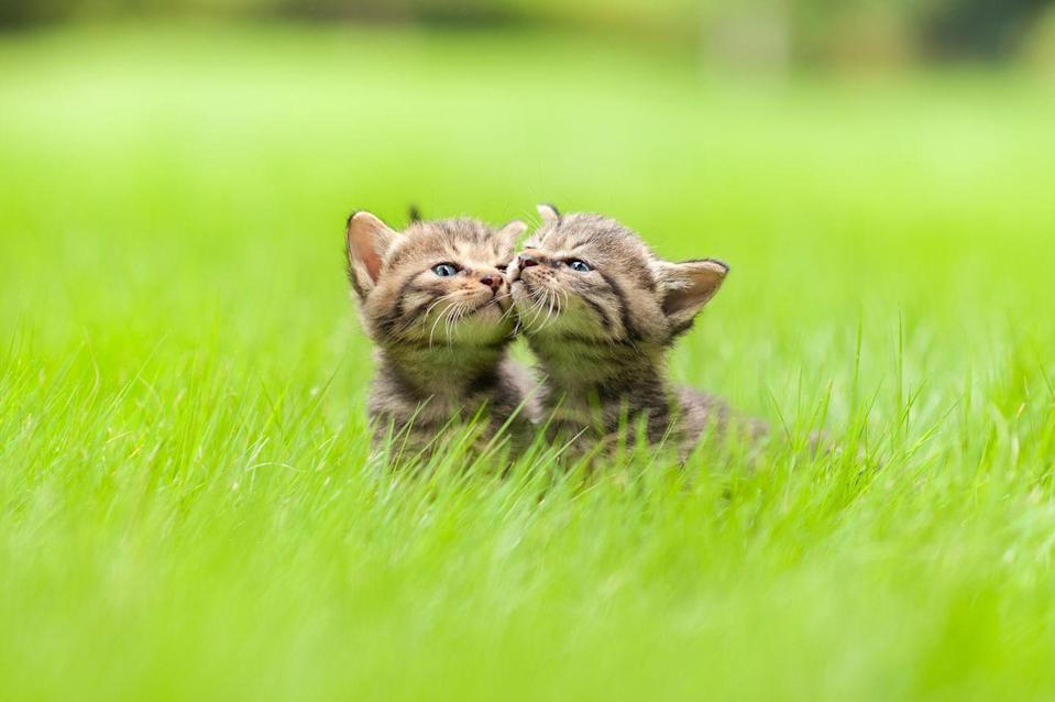 <p>If this photo doesn't make you want to run out and adopt two little kittens right now, we just don't know what will. </p>