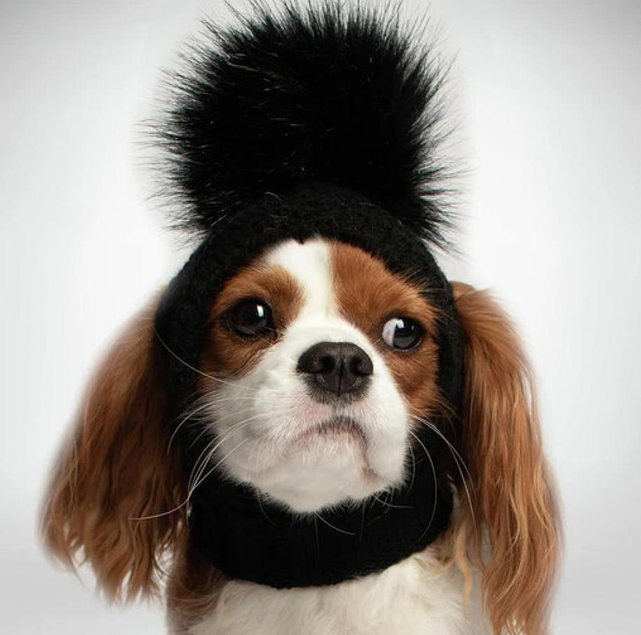 """<p>Keep your pooch chic and cozy all winter long with a hat that is as fluffy as your pup. </p> <p><strong>Buy it!</strong> Dog Beanie, Starts at $21.99; <a href=""""https://styledbytrix.com/products/good-soul-infinity-scarf-black"""" rel=""""nofollow noopener"""" target=""""_blank"""" data-ylk=""""slk:StyledByTrix.com"""" class=""""link rapid-noclick-resp"""">StyledByTrix.com</a></p>"""