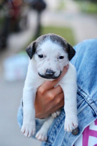 PHOTO: Salvadore Dolly, a 5-week-old pup, was named after Spanish painter Salvador Dali, who also had a notable mustache. Salvadore Dolly is currently in foster care with her mom and 10 siblings. (Hearts & Bones Rescue)