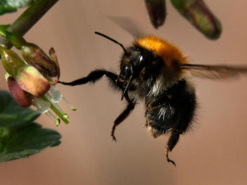 Pesticides could be designed that don't affect bumblebees: Getty