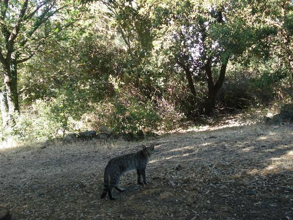 Elusive European Wildcats Found Hiding Out on Mount Etna