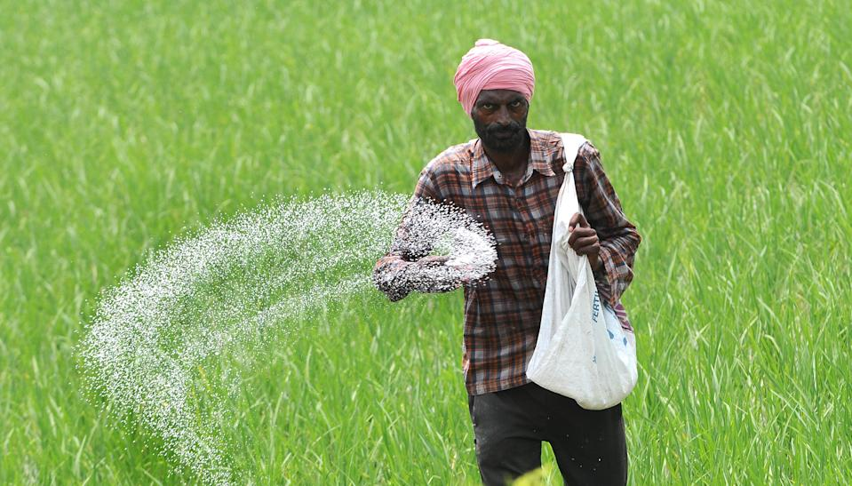 A farm labourer sprinkles fertilizer over paddy crop, at Shermajra Village, on July 29, 2020 in Patiala, India. (Photo by Bharat Bhushan/Hindustan Times via Getty Images)