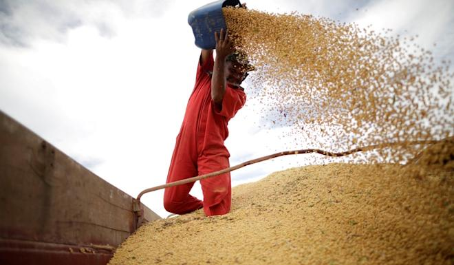 Brazil is the world's biggest soybean exporter and the main supplier to China. Photo: Reuters
