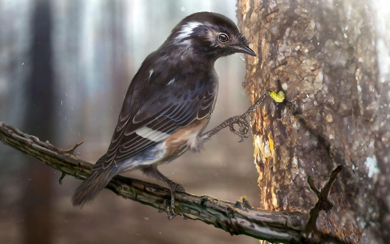 Scientists believe that the bird used its toes to hook maggots out of tree trunks - Zhongda Zhang / Current Biology