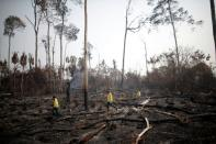 Brazilian Institute for the Environment and Renewable Natural Resources (IBAMA) fire brigade members walk in a burned area near Apui