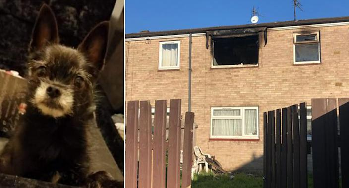 Midnight the dog alerted his owners to a fire in their flat. (Reach)