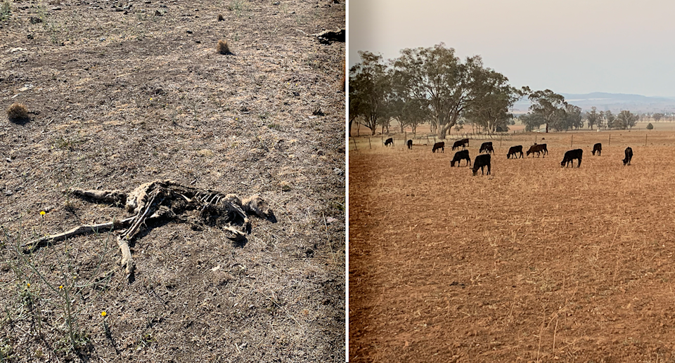 Father of two, Justin Smith, says northwest NSW looked like Armageddon at the height of the drought in 2019. Source: Michael Dahlstrom