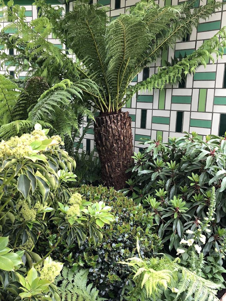 """<p>If you shy away from bright colours, you'll be pleased to see that greens, whites and pale yellows are dominating the planting palettes of the gardens this year with texture and form supplying extra interest.  </p><p>Ferns, once left languishing in the shadows, are seeing a particular resurgence creating a vibrant green foliage on both <strong>Andy Sturgeon</strong> and <strong>Sarah Eberle's</strong> gardens, as well as featuring on the Warner's Distillery garden designed by <strong>Helen Elks-Smith</strong>. In Addition, <strong>Kate Gould MSGD</strong> has mixed Aspidistra, normally used as an indoor plant, with swathes of Hostas and trees ferns punctuated by explosions of yellow Irises and Lupins to create a calming and uplifting space for Greenfingers Charity, and <strong>Tom Stuart-Smith MSGD </strong>uses a palette of greens on his garden for <a href=""""https://www.housebeautiful.com/uk/garden/a27286056/chelsea-flower-show-2019-rhs-bridgewater-garden/"""" target=""""_blank"""">RHS Bridgewater</a>.</p><p><em>Image: Kate Gould MSGD</em></p>"""