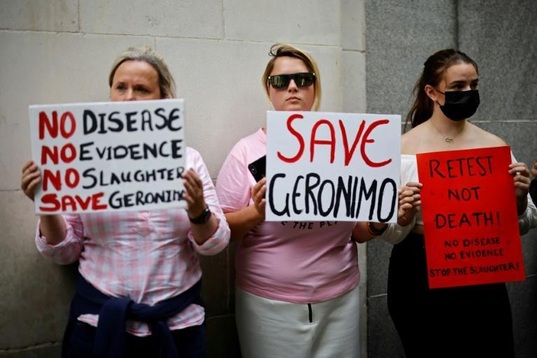 Geronimo's owner and supporters say the tests he has had for bovine tuberculosis were likely false positives