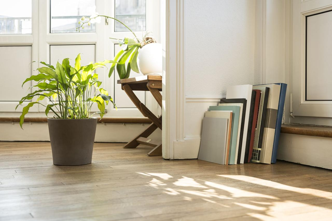 """<p>If you're not a full-blown plant parent yet because you haven't found the right low-light, low-maintenance greenery—you're in the right place. We've compiled a list of the best low-light varieties that won't want anything to do with your already-crowded windowsill. Check out the low-light plants below, then, once you've built up the confidence to go all out, take your Plant Lady status one step further with <a href=""""https://order.hearstproducts.com/subscribe/hstproducts/237049"""" target=""""_blank""""><em>The Backyard Homestead</em></a>, a beginner's guide to gardening. You've got this. </p>"""