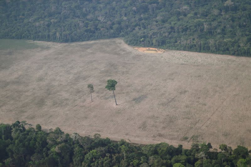 An aerial view shows a tree at the center of a deforested plot of the Amazon near Porto Velho, Rondonia State