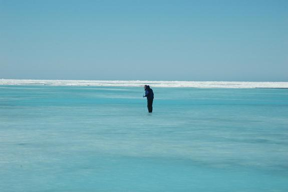 A rubber-suited Ken Golden wades into icy Arctic waters to measure the depth of this melt pond. Understanding how environmental conditions like temperature and incoming solar radiation affect percolation, or the movement of water up and down th