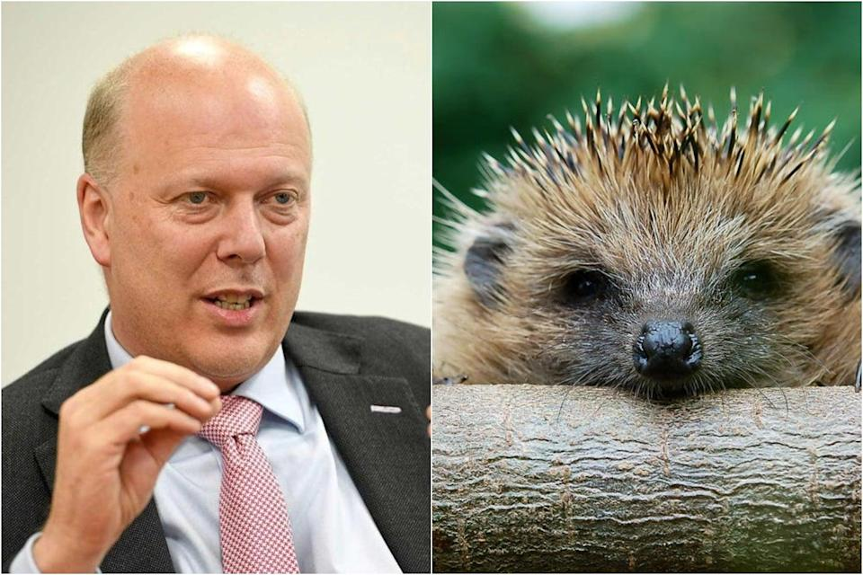 <p>Chris Grayling is calling for hedgehogs to be 'as well protected as any other popular but threatened British animal'</p> (Jeremy Selwyn/Getty Images)