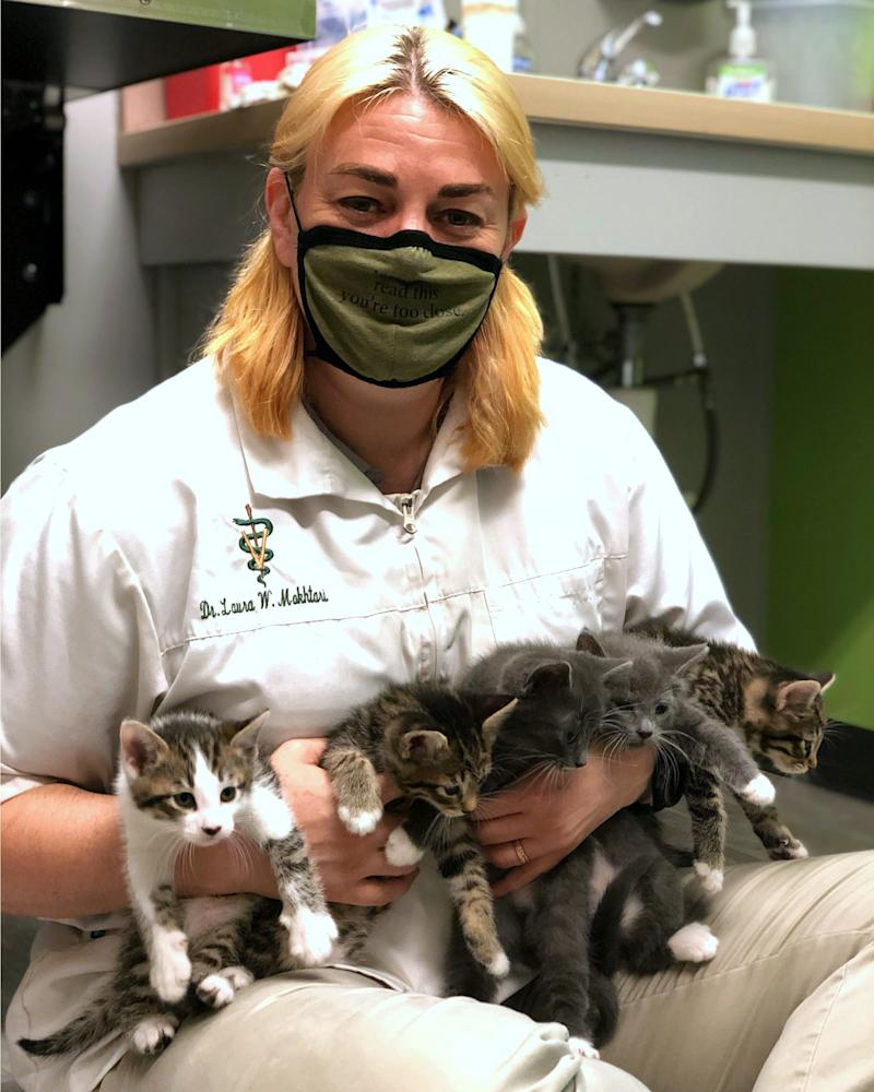 The Pet Community Center in Nashville has a waiting list of nearly 1,000 rescue cats to be spayed or neutered.