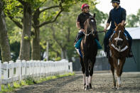 Belmont Stakes entrant Rock Your World, center, is walked towards the main track for a training run ahead of the 153rd running of the Belmont Stakes horse race, Wednesday, June 2, 2021, at Belmont Park in Elmont, N.Y. (AP Photo/John Minchillo)