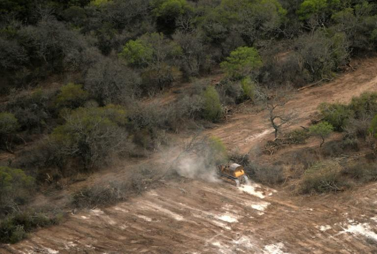 A bulldozer removes native forest preparing the fields for agriculture in Bella Vista in northwest Argentina