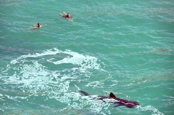 Huge 16ft shark pictured near swimmers in Cornwall