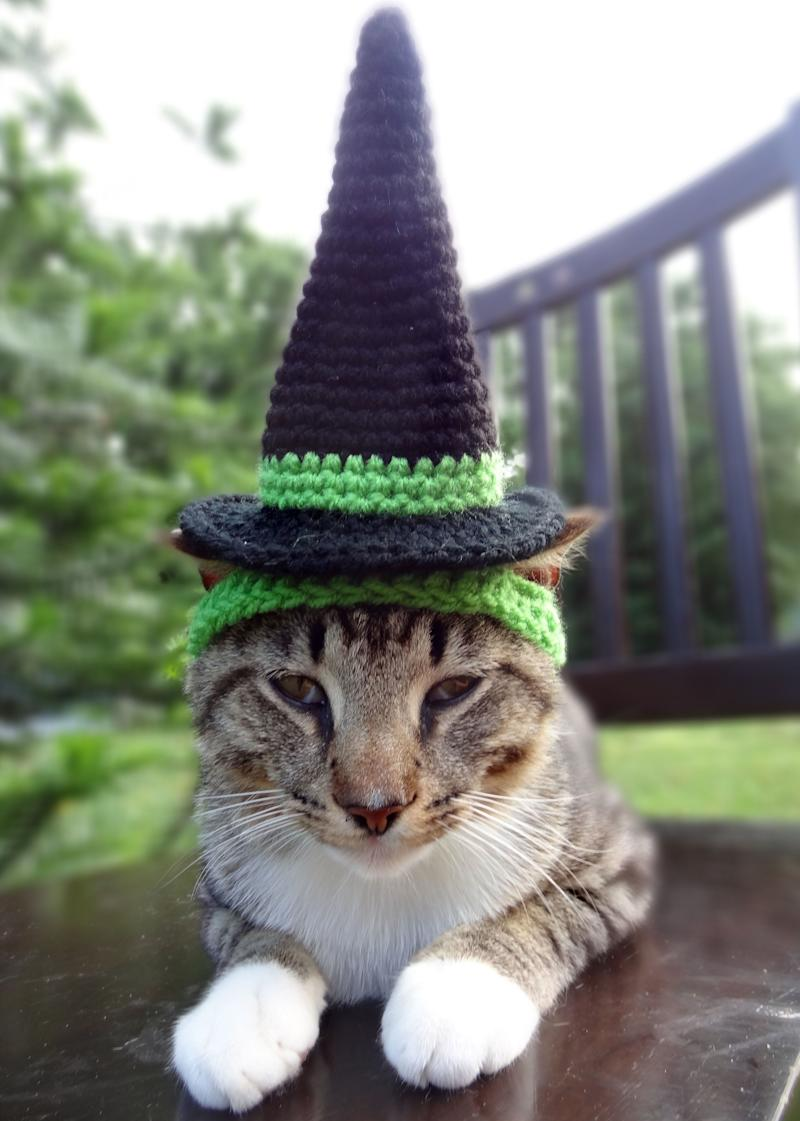 Witch cat hat.