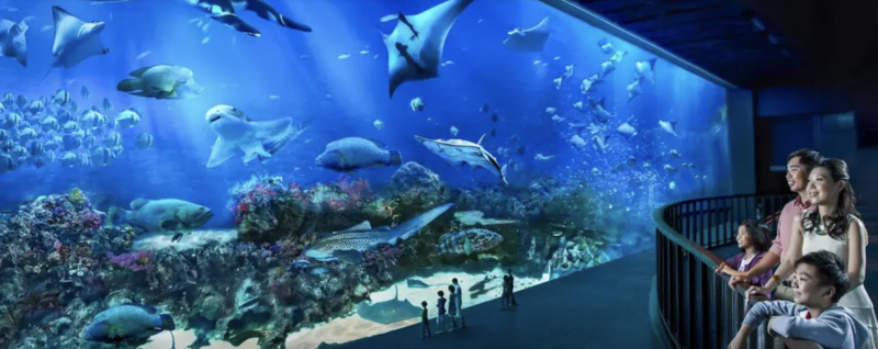 S.E.A. Aquarium One-Day Ticket, S$37 (was S$41). PHOTO: Klook