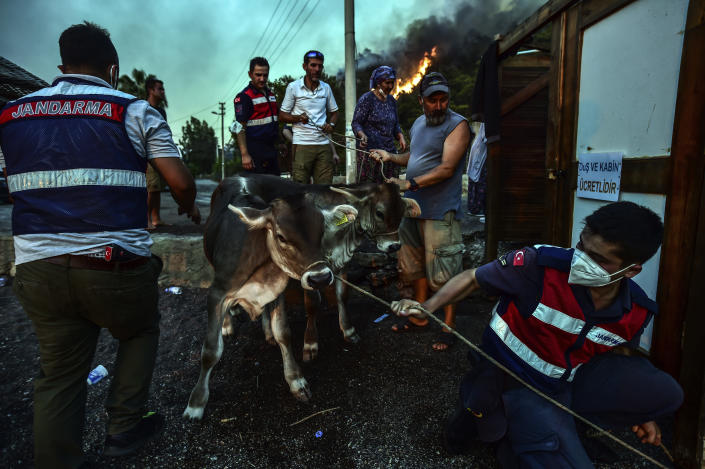 People leave with their animals as advancing fires rage Hisaronu area, Turkey, Monday, Aug. 2, 2021. For the sixth straight day, Turkish firefighters battled Monday to control the blazes that are tearing through forests near Turkey's beach destinations. Fed by strong winds and scorching temperatures, the fires that began Wednesday have left eight people dead. Residents and tourists have fled vacation resorts in flotillas of small boats or convoys of cars and trucks. (AP Photo)