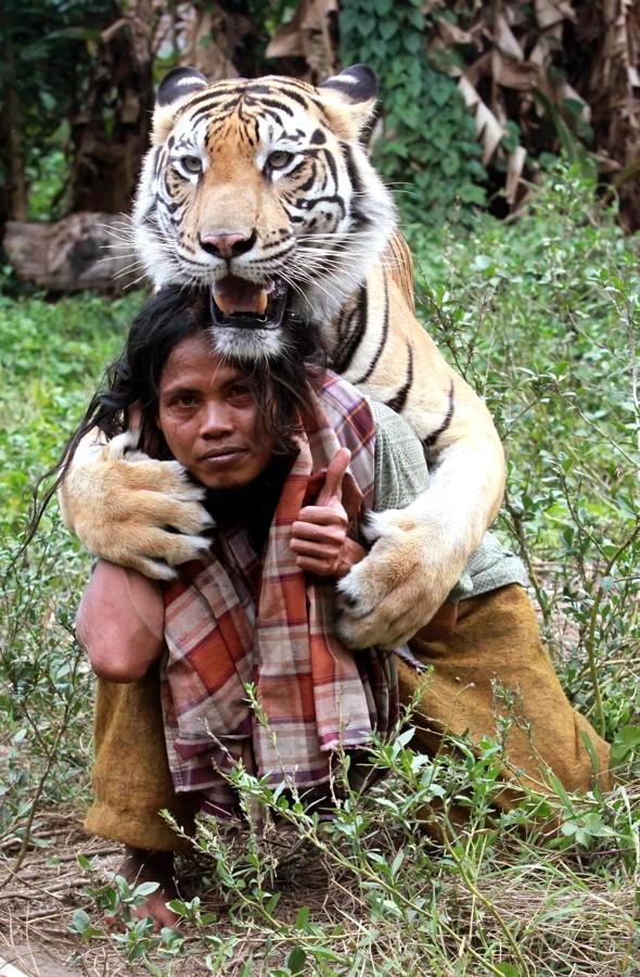 Video: Woman plays with 'best friend' - a 27-stone tiger