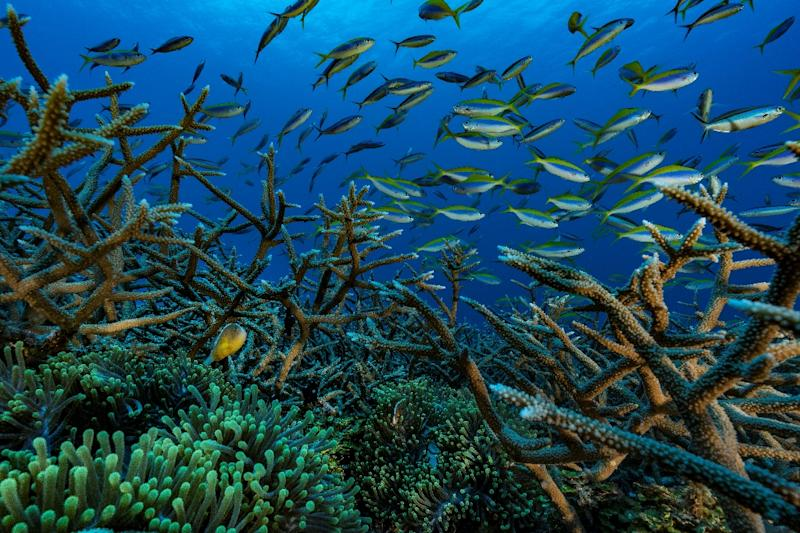 Coral reefs, like this one off the Comoros archipelago in the Indian Ocean, 'serve as natural, submerged breakwaters' (AFP Photo/Alexis Rosenfeld)