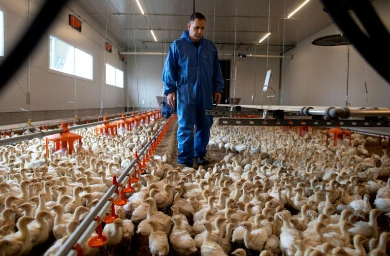 Austrian turkey breeders and government officials would like their standards adopted across the European Union