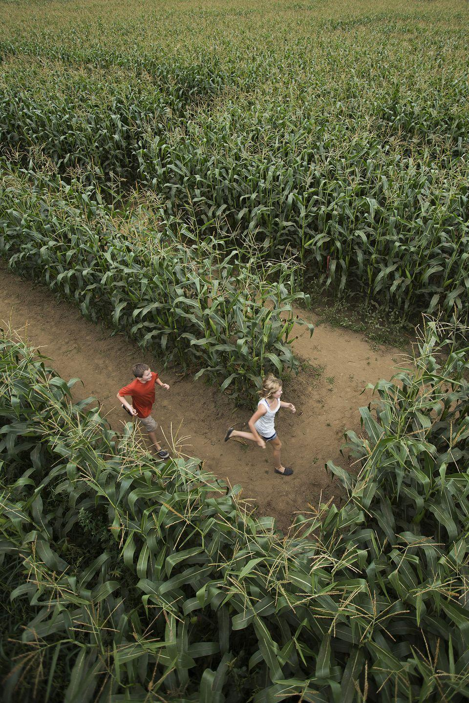 """<p>Put your skills to the test by buying a combo ticket for <a href=""""https://bufordcornmaze.com/"""" rel=""""nofollow noopener"""" target=""""_blank"""" data-ylk=""""slk:Buford's Corn Maze"""" class=""""link rapid-noclick-resp"""">Buford's Corn Maze</a> five-acre labyrinth and haunted forest (for kids ages 10+), and try completing them back to back. In between mazes, be sure to check out the rest of the <a href=""""https://go.redirectingat.com?id=74968X1596630&url=https%3A%2F%2Fwww.tripadvisor.com%2FTourism-g34806-Buford_Georgia-Vacations.html&sref=https%3A%2F%2Fwww.countryliving.com%2Flife%2Ftravel%2Fg22717241%2Fcorn-maze-near-me%2F"""" rel=""""nofollow noopener"""" target=""""_blank"""" data-ylk=""""slk:Buford, Georgia"""" class=""""link rapid-noclick-resp"""">Buford, Georgia</a>, farm's activities like their kid-friendly slides, fun jumping pillows, scenic hayrides, and more.</p><p><a class=""""link rapid-noclick-resp"""" href=""""https://go.redirectingat.com?id=74968X1596630&url=https%3A%2F%2Fwww.tripadvisor.com%2FAttractions-g34806-Activities-Buford_Georgia.html&sref=https%3A%2F%2Fwww.countryliving.com%2Flife%2Ftravel%2Fg22717241%2Fcorn-maze-near-me%2F"""" rel=""""nofollow noopener"""" target=""""_blank"""" data-ylk=""""slk:PLAN YOUR TRIP"""">PLAN YOUR TRIP</a> </p>"""