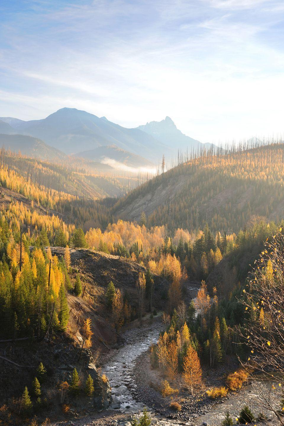 """<p><strong>Where to go:</strong> The larch trees — deciduous conifers that lose their needles — in <a href=""""https://www.nps.gov/glac/planyourvisit/fall.htm"""" rel=""""nofollow noopener"""" target=""""_blank"""" data-ylk=""""slk:Glacier National Park"""" class=""""link rapid-noclick-resp"""">Glacier National Park</a> turn a brilliant gold each October, and more wildlife appears as the animals prepare for winter hibernation. </p><p><strong>When to go: </strong>Mid- or Late October</p><p><a class=""""link rapid-noclick-resp"""" href=""""https://go.redirectingat.com?id=74968X1596630&url=https%3A%2F%2Fwww.tripadvisor.com%2FHotels-g143026-Glacier_National_Park_Montana-Hotels.html&sref=https%3A%2F%2Fwww.redbookmag.com%2Flife%2Fg34045856%2Ffall-colors%2F"""" rel=""""nofollow noopener"""" target=""""_blank"""" data-ylk=""""slk:FIND A HOTEL"""">FIND A HOTEL</a></p><p><strong>RELATED: <a href=""""https://www.goodhousekeeping.com/life/travel/g26239097/best-airlines/"""" rel=""""nofollow noopener"""" target=""""_blank"""" data-ylk=""""slk:The Best Airlines in the World Will Make You Love Flying Again"""" class=""""link rapid-noclick-resp"""">The Best Airlines in the World Will Make You Love Flying Again</a></strong></p>"""