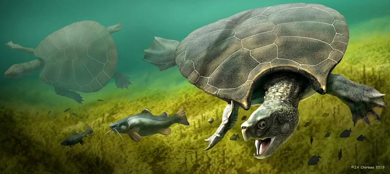 A graphic reconstruction of the giant turtle Stupendemys geographicus (Picture: SWNS)