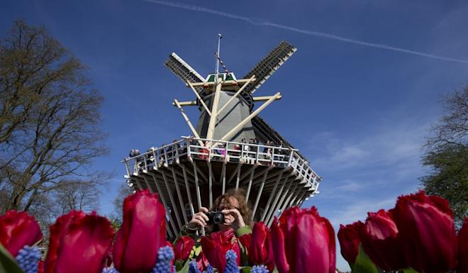 Blossoming tulips at Keukenhof, known as the Garden of Europe. Photo: AP