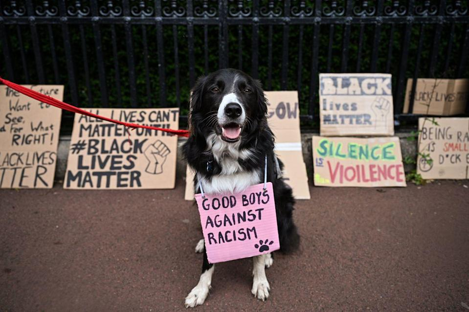 "<p>Goodest boy ever? Goodest boy ever. (Also worth pointing out the nice counterpoint to ""All Lives Matter"" on the left.)</p>"