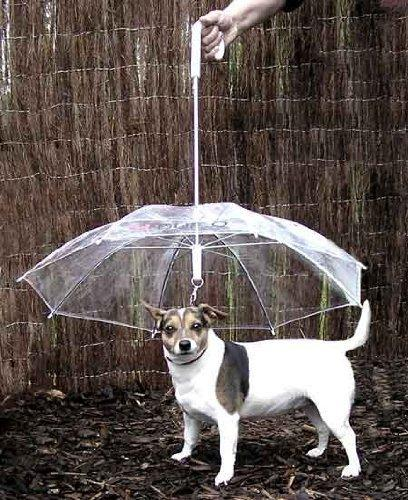 """<p>Many dogs need exercise everyday in order to maintain optimal health. Don't let rain get in the way of a daily walk. This handy leash attachable umbrella will keep your pet dry no matter what the weather. <a href=""""http://www.amazon.com/Umbrella-Keeps-your-Comfortable-Rain/dp/B005ESZL2A/ref=sr_1_2?s=pet-supplies&ie=UTF8&qid=1373474942&sr=1-2&keywords=dog+umbrella"""" target=""""_blank"""">Available from Amazon for $6.98</a>. <i>(Photo: <a href=""""http://www.amazon.com/Umbrella-Keeps-your-Comfortable-Rain/dp/B005ESZL2A/ref=sr_1_2?s=pet-supplies&ie=UTF8&qid=1373474942&sr=1-2&keywords=dog+umbrella"""" target=""""_blank"""">Amazon</a>)</i></p>"""