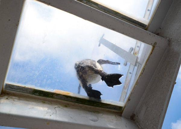 ▲ You can observe the cute hopping of penguins through the overhead glass floor from below.
