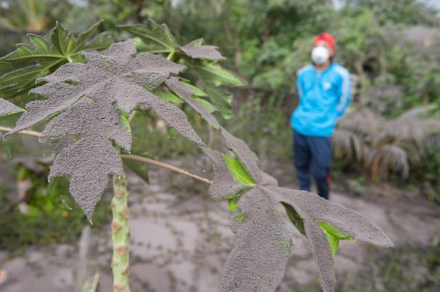 <p>Plants in a garden are covered in ash from the eruption of Mount Agung volcano in Jungutan Village, Karangasem, Bali, Indonesia Nov. 26, 2017. (Photo: Antara Foto/Nyoman Budhiana/ via Reuters) </p>